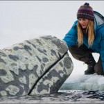 Big Miracle: Shooting in Alaska