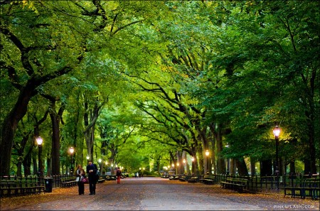 All About Central Park in New York City